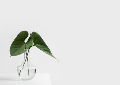 a clear vase with two large leaves in it